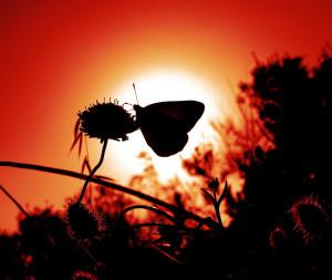 butterfly-498606_1280